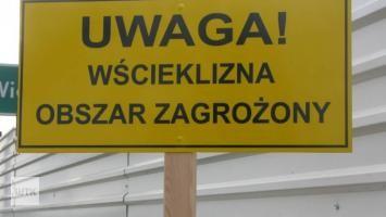Wścieklizna w Poznaniu! Wyznaczono dwa obszary zagrożone